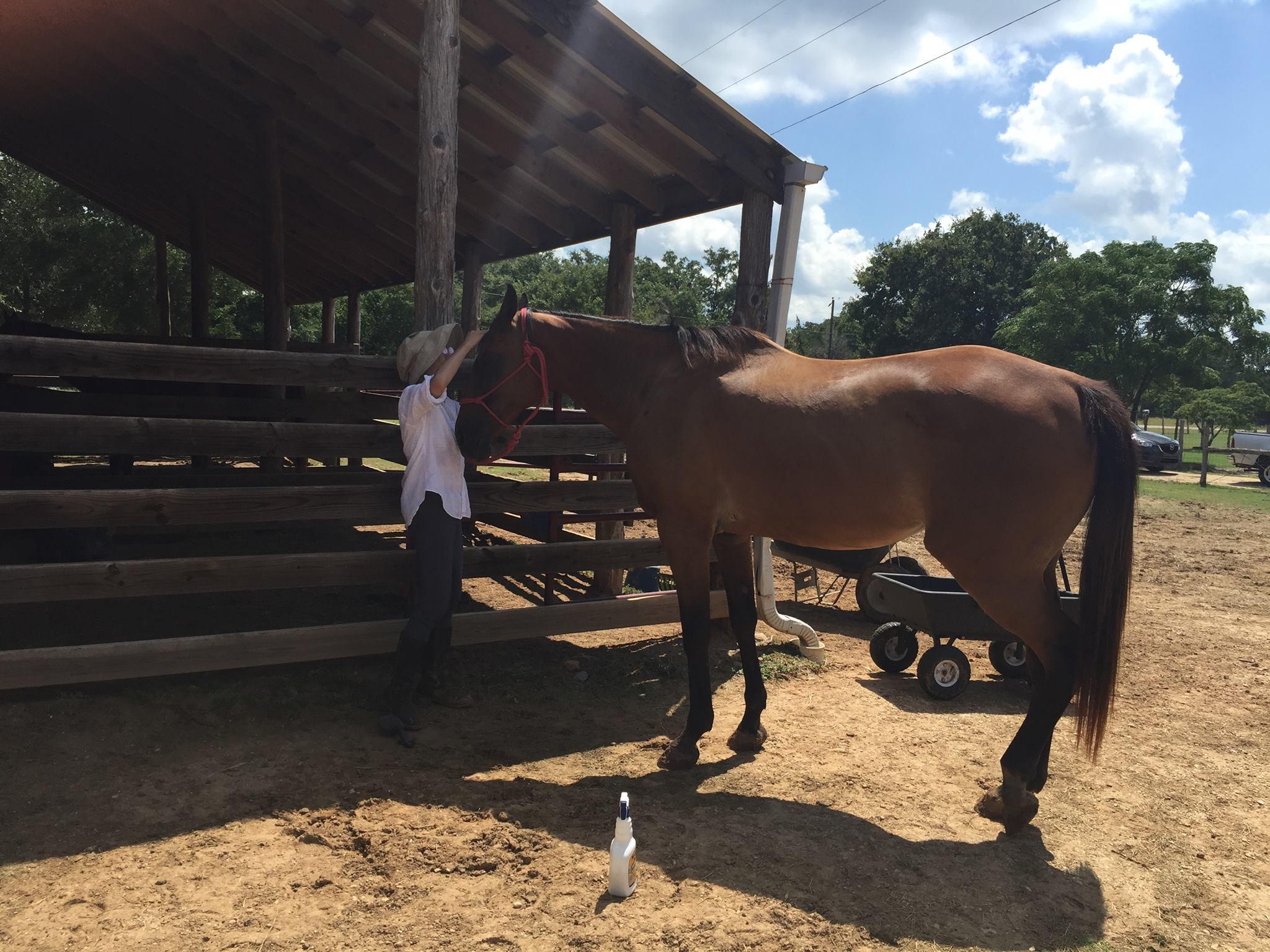 本日の馬セミナー