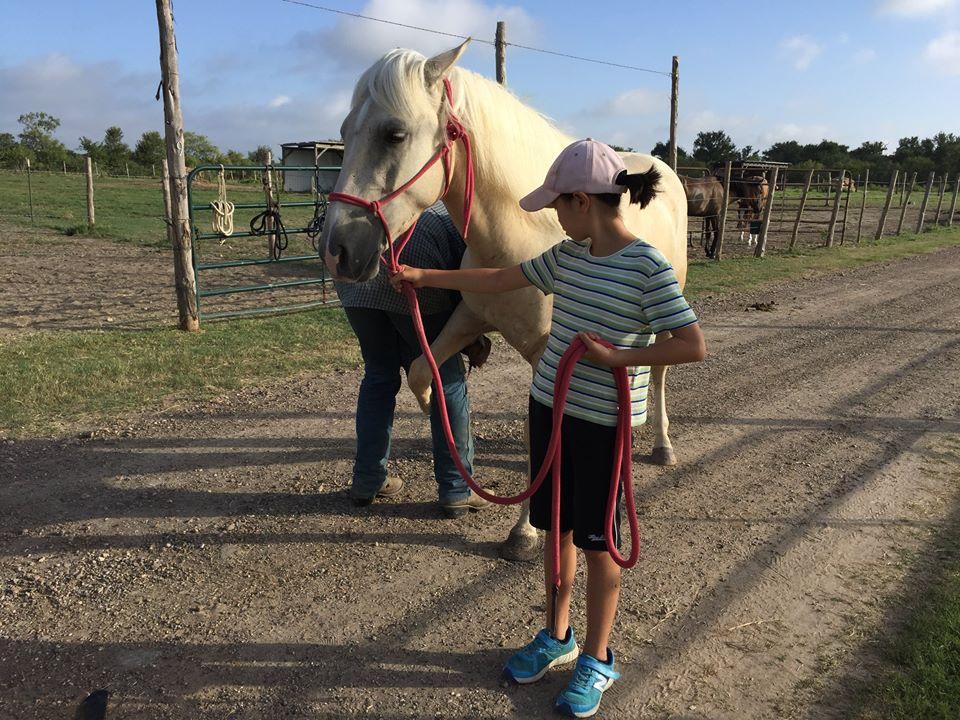 テキサス馬セミナー第一陣が終了しました